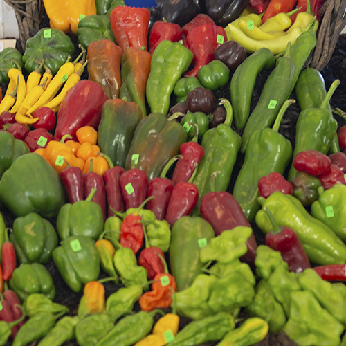 Selection of Peppers at Country Fair